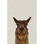 Marmont Hill Staring Llama II 16-Inch x 24-Inch Canvas Wall Art