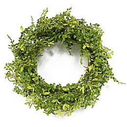 Puleo International 22-Inch Artificial Jasmine Leaf Wreath