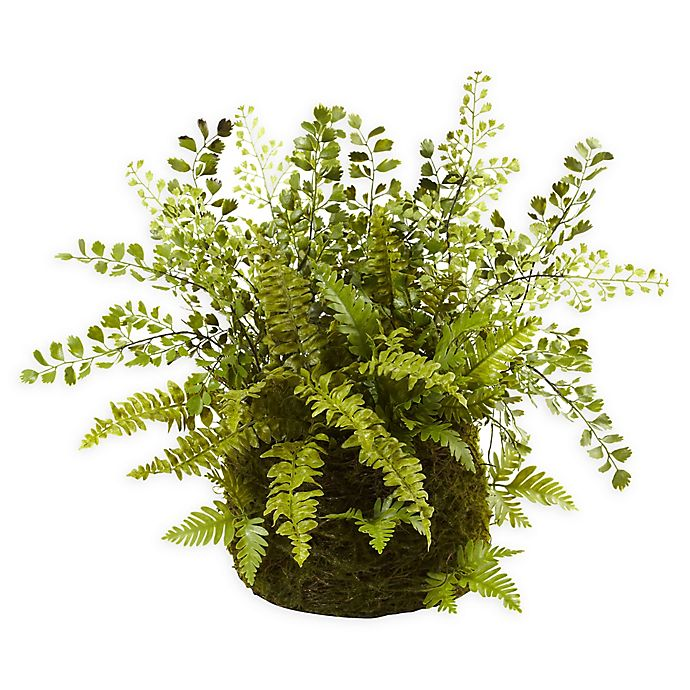 Alternate image 1 for Nearly Natural Mixed Fern with Twig and Moss Basket