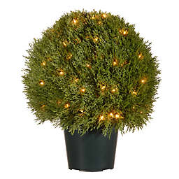 National Tree Company® 24-Inch Pre-Lit Cedar Topiary Artificial Tree