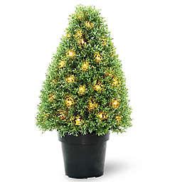 National Tree Company 30-Inch Pre-Lit Boxwood Tree