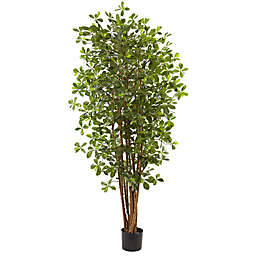 Nearly Natural 6-Foot Artificial Black Olive Tree