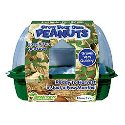 Dunecraft Grow Your Own Peanuts Plant Kit