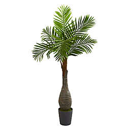 Palm Tree Bed Bath And Beyond Canada