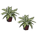 Nearly Natural 12-Inch Silver Queen Silk Plants w/Planter (Set of 2)
