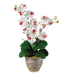 Nearly Natural 25-Inch Double Phalaenopsis Orchid Silk Flower Arrangement in White