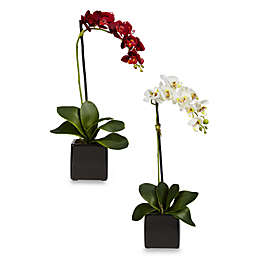 Nearly Natural 22.5-Inch Phaleanopsis Orchid w/Black Vase Silk Arrangement (Set of 2)