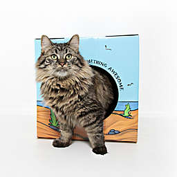 Kitty Cardboard Designer Box Purradise House For Cats