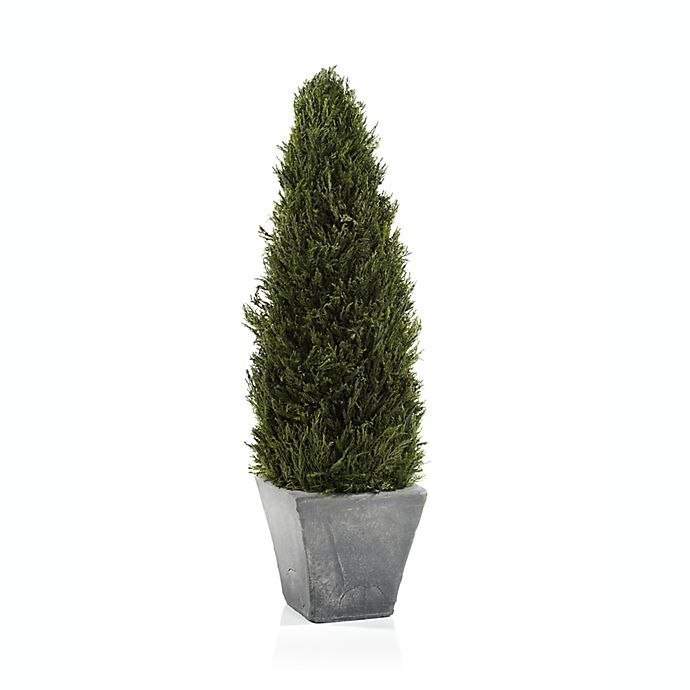 Alternate image 1 for Bee & Willow™ Home Cypress Tree