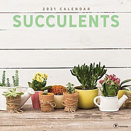 TF Publishing 2021 Succulents Wall Calendar