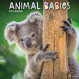 TF Publishing 2021 Animal Babies Wall Calendar