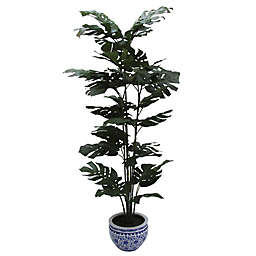 W Home 60-Inch Split Philo Tree in Round Blue/White Ceramic Pot