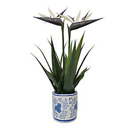 W Home 25-Inch Bird of Paradise in Round Blue/White Ceramic Pot