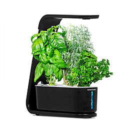 AeroGarden™ Sprout in Black