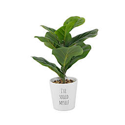 Elements 15-Inch Artificial Fiddlehead Ficus Plant in Ceramic Pot