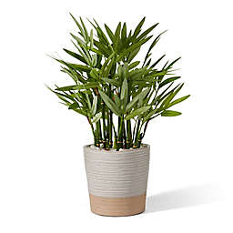 Elements 15-Inch Artificial Bamboo Plant in Ceramic Pot