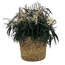 Bee & Willow™ Dried Floral Arrangement in Natural Basket