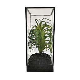 Global Caravan™ Glass Cloche with Faux Succulent Plant