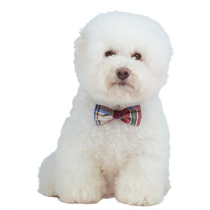 Alternate image 1 for Bee & Willow™ Home 2-Pack Pet Bow Ties with Collar