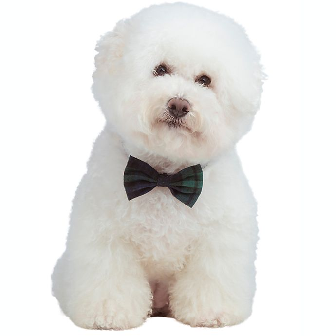 Alternate image 1 for Bee & Willow™ Home 2-Pack Pet Bow Ties with Collar in Blue Plaid