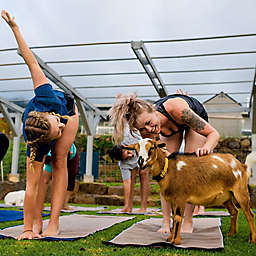 Maui Yoga with Miniature Goats by Spur Experiences®