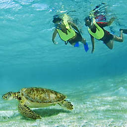 ATV Ride, Zip Lining and Snorkeling Day by Spur Experiences®
