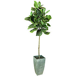 Fiddle Leaf 60-Inch Fig Tree in Deco White Galvanized Metal Pot