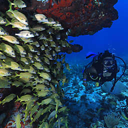 Scuba Diving For Beginners in Cancun by Spur Experiences®