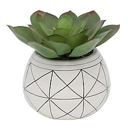 Flora Bunda 6.75-Inch Artificial Succulent with Geometric Ceramic Pot in White/Black