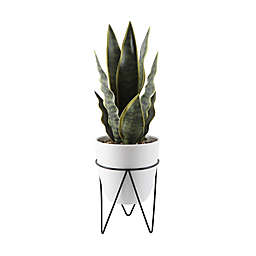 Flora Bunda 15.25-Inch Faux Snake Plant with Cement Pot on Metal Stand in White/Black