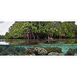 Mangrove Lagoon Stand Up Paddleboard Tourby Spur Experiences®  (Saint Thomas)