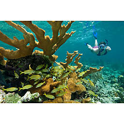 """""""Best Of"""" St. John Kayak, Hike, and Snorkel Tour by Spur Experiences®"""