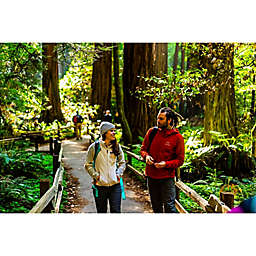 Muir Woods and Wine Country Day Tour by Spur Experiences®