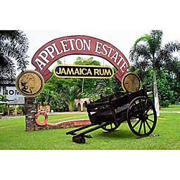 Jamaica Appleton Estate Rum Tour by Spur Experiences®