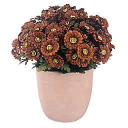 Bee & Willow™ 20-Inch Zinnia Floral Arrangement with Cement Pot in Dark Brown