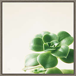 Succulent Simplicity VIII 16-Inch Square Framed Wall Art