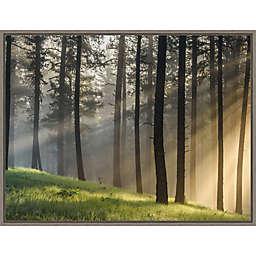 Light Rays Through Forest 23.5-Inch x 18-Inch Framed Wall Art