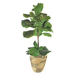 LCG Floral 40-Inch Fig Tree in Urn Basket