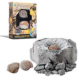 Fossil Excavation Mini Kit
