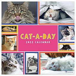 TF Publishing Cat-A-Day 2022 Wall Calendar