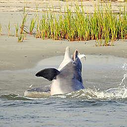 Charleston Dolphin Eco Cruise