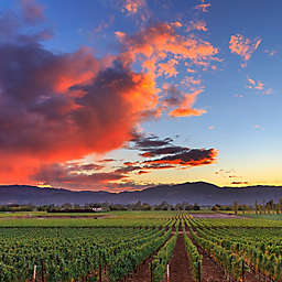 San Francisco Redwoods and Wine Country Tour by Spur Experiences®