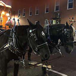 St. Louis Downtown Hermann, Missouri Horse Carriage Tour by Spur Experiences®