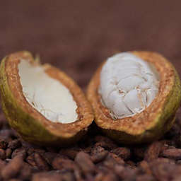 Belize Cacao Farm & Chocolate Making by Spur Experiences®