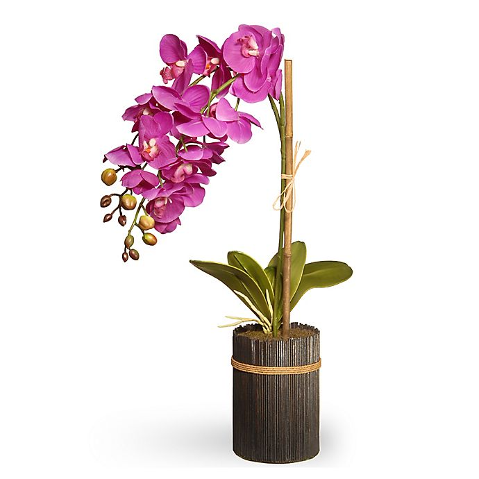 National Tree Company 23-Inch Artificial Orchid in Purple with Brown on purple silver plant, purple blossom plant, purple eucalyptus plant, purple moss plant, purple red plant, purple rosemary plant, purple blue plant, purple holly plant, purple tulip plant, purple peppermint plant, purple parasol plant, purple jade plant, purple vanilla plant, purple opium plant, purple citronella plant, purple kiwi plant, purple pagoda plant, purple juniper plant, purple dandelion plant, purple freesia plant,