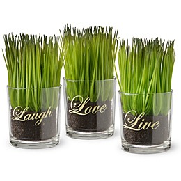 National Tree Company 6-Inch Artificial Sprout-Filled Glass Assortment in Green (Set of 3)