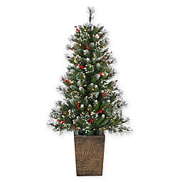 Sterling 4-Foot Pre-Lit Potted Glazier Pine Christmas Tree