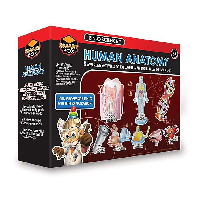 Alternate image 1 for Tedco Toys EIN-O Science Smart Box Human Anatomy Science Kit