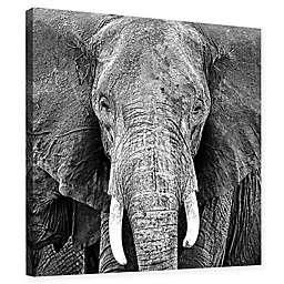 Elephant Canvas Wall Art in Black