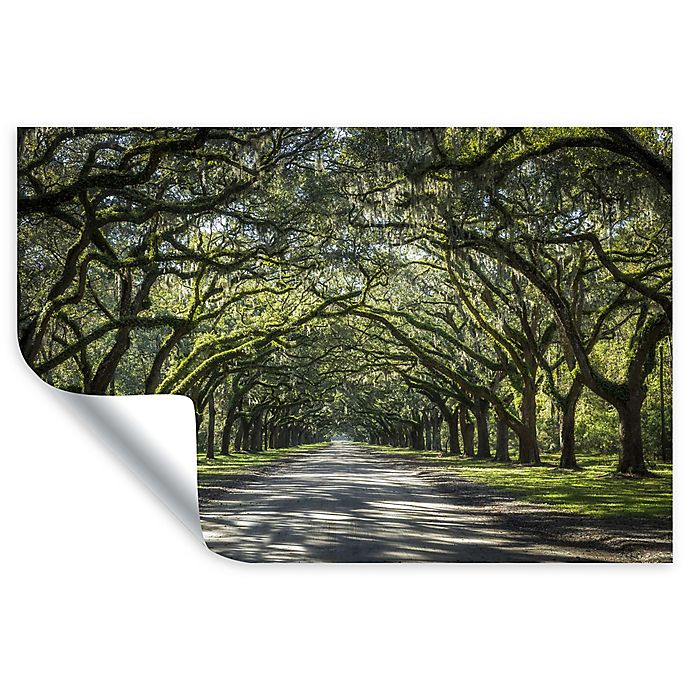 Alternate image 1 for Oak Trees with Spanish Moss in Savanna Georgia 12-Inch x 18-Inch Wall Decal in Green